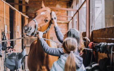 """Semesterkurs: """"Hallo Pferd"""" – die ersten Griffe, die ersten Schritte"""